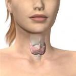 6 фактов о щитовидной железе , которые вы можете не знать.